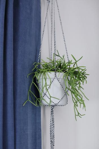 窓辺に吊るしたハンギングプランツは紐とカーテンの色を合わせて、落ち着きのある雰囲気に。細めの紐ですっきりとした仕上がりになっています。
