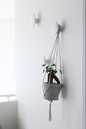 アイデア次第でお好みのところに吊るすことができるハンギングプランツ。観葉植物を置く場所がないと思ったら、ぜひ、ハンギングプランツを試してみてください。グリーンのある暮らしは、より良い暮らしへの第一歩になりますよ♪