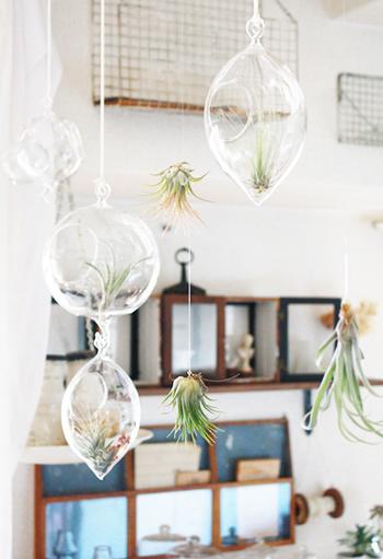 ガラスドームを使ったハンギングプランツ。その隣に、直にエアプランツ自体を紐で吊るしています。とてもお洒落な飾り方ですね。