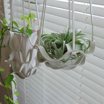 やわらかな印象のプラントハンガーにはたっぷりとしたエアプランツを入れています。ブラインド越しの優しい光が大好きな植物なので、この場所は特等席ですね。