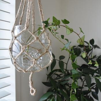 ガラスの鉢は窓辺に置くと、キラキラと光を反射して輝くのがとても美しいですね。一日の光の変化を敏感に感じ取ることができそうです。