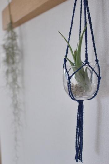 ちいさなガラス鉢には深いブルーの紐がとてもよく似合っています。エアプランツのグリーンがキュートな印象です。