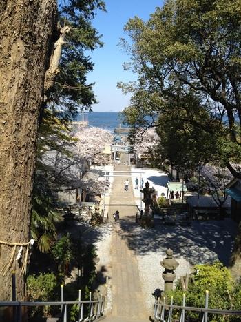 走水神社の階段を上ったら、ぜひ参道を振り返ってみましょう。青い海が広がる美しい景色を眺めることができますよ。走水神社に足を運んでみれば、この場所がパワースポットとして人気があるのを実感できるはず。ぜひパワーをいただきに訪れてみてくださいね。