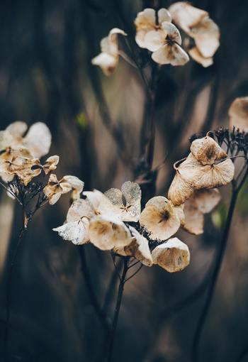 大人になると「謝る」といっても、友達と喧嘩した時に「ごめんなさい」というのとは少し状況が違ってきます。なぜなら、例え自分が悪くなくても謝らなくてはいけないことがあるからです。