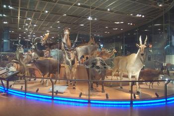 国立科学博物館でおすすめしたいのが、地球館3階にある「動物のはく製群」です。115体のはく製の中には、すでに絶滅してしまった動物「ニホンオオカミ」などもあり、大変貴重な展示になっています。
