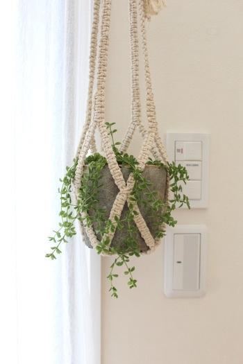 こぢんまりとしたグリーンには凝った編み方のプラントハンガーを。繊細なグリーンの流れがより強調されています。