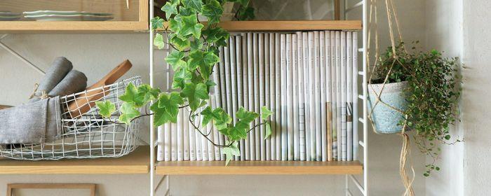 ハンギングプランツを取り入れることによって、狭いお部屋でも空間を利用して、インテリアとして活用していくことができます。グリーンを目の高さに配することもできるので、癒し効果もアップしますよ。ハンギングプランツをお部屋に招くためのあれこれをご紹介していきます。