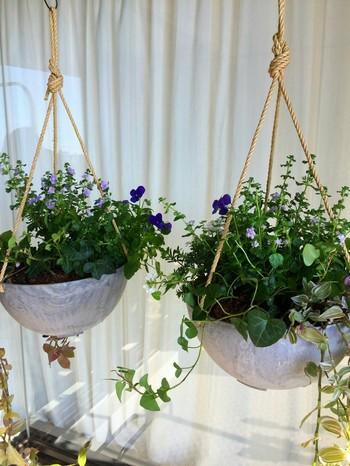 こちらはプランツハンガーと鉢が一体になっているタイプ。これなら、落下の危険がなくて安心して寄せ植えなど大きめの植物も入れることができます。