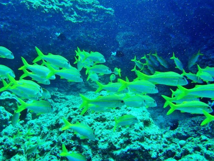 浅瀬でも珊瑚礁がすぐ近くにある渡嘉志久ビーチの海中では、可愛らしい熱帯魚たちが優雅に泳ぎ回っています。美しい魚たちと一緒に泳いでいると、まるで竜宮城へ迷い込んだかのような錯覚を感じます。