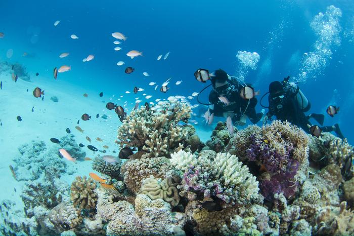 世界的に貴重な珊瑚礁としてラムサール登録されている阿真ビーチの海中は、色とりどりのサンゴの間を熱帯魚たちが優雅に泳ぎまわっています。