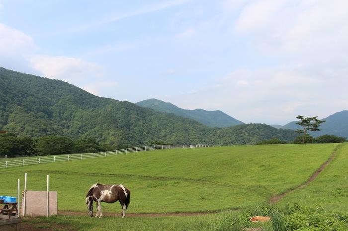 """「大笹牧場」は、日光駅から牧場行きのバスで約50分ほどのところにあります。標高1,300メートルの高原にあり""""天空のリゾート牧場""""とも呼ばれています。"""