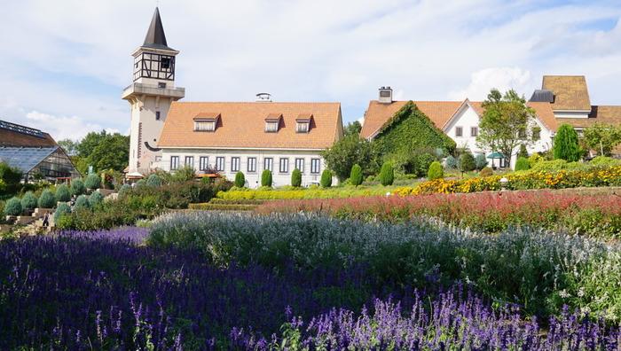 先ほどご紹介した明野のサンフラワーフェスの場所からほど近いところにある「ハイジの村」は、その名の通りハイジの世界観を楽しめる広大な施設。たくさんの草花は、まるでスイス・アルプスの大自然のよう。