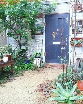 さまざまな種類のグリーンから家の外観、おしゃれな小物に至るまで、すべてが絶妙に調和した空間にしっくりと馴染んでいるシンボルツリーのシマトネリコ。こんなお庭を作りたい!と憧れる方も多いのではないでしょうか。年月を重ねながら少しずつ自分好みに作り上げていくのは、やっぱりガーデニングの醍醐味ですね。