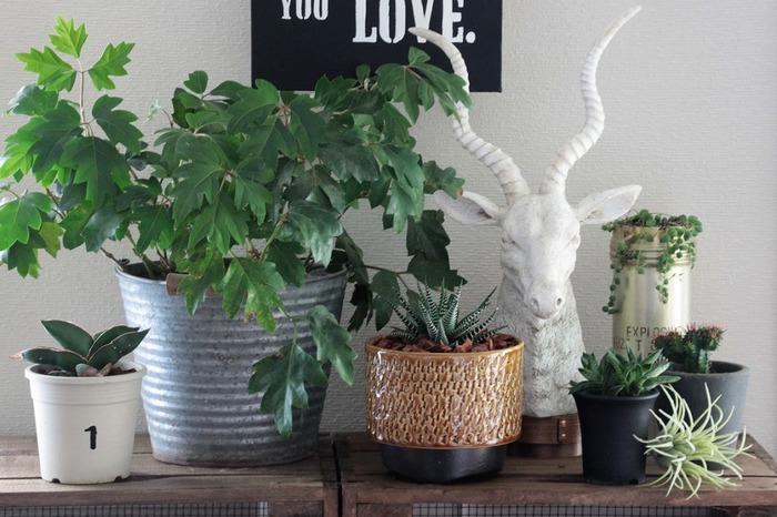 お庭がない方は、テーブルやベランダに飾る事ができるグリーンアイテムを並べると、都心でも自然の中にいるかのようなアウトドア気分を味わえます。植物を育てることが面倒に感じる方には、リアルなデザインのフェイクプランツを使って気分を盛り上げましょう。