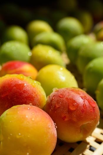ちなみに、青梅は梅酒や甘露煮シロップ漬けなどに、黄色く完熟した梅は、梅干しや梅ジャム作りに適しています。 最近では、スーパーなどで青梅、黄梅など、「梅づくり」に適した梅が手軽に手に入るので、是非、活用してみて下さいね!