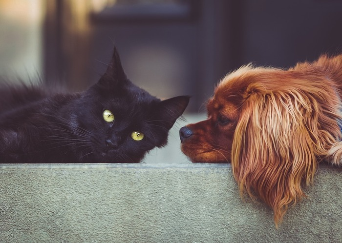 アニマルセラピーというセラピー手法をご存知ですか?ペットには「癒し」の効果があると言われています。ペットを飼っている人は、ペットを撫でたり、一緒に遊んだり、眠っている顔を見ているだけでも癒されるはず。ペットのいない方も、苦手やアレルギーでなければ、ぜひ動物園や水族館などで、動物を眺めたり触れ合ったりしてみてください。
