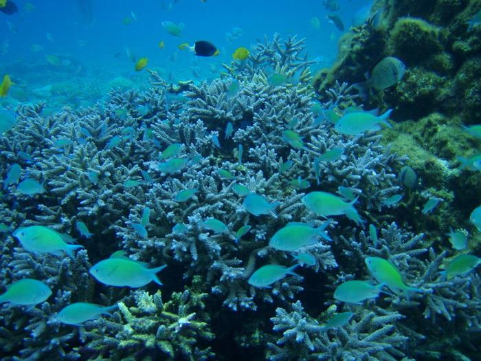 抜群の透明度を誇る安慶名敷島の海中は、まるで竜宮城そのものです。ここでは、様々な色・形をしたサンゴ、透明な青い海、色鮮やかな魚たちなど、豊富な種類の海の生きものたちが、観光客を待っています。