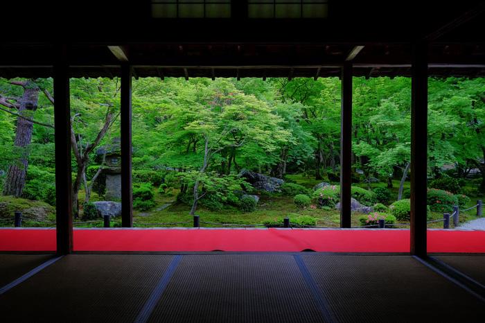 緑と赤のコントラストが美しい、本堂の前に広がる「十牛之庭(じゅうぎゅうのにわ)」。着物で訪れればさらに情緒が深まります。