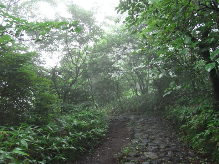 """""""霧降""""という名の通り、霧が出ることの多い場所。特に雨の日は真夏でも肌寒いので、羽織るものを持っていくと安心です。トレッキングコースもあるので、しっかり歩く予定の方は準備を万全に!"""