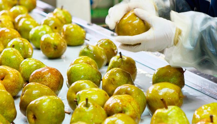 そして、自社の搾汁工場に運ばれてくるのは、味は美味しくても、大きさや形が規格外のために、生食用としてはお店に並ぶことが出来ない果物達なんです。生産者さんが丹精込めて作った、そのまま食べても美味しい果物ばかりを使っているので、味と香りは最高です!