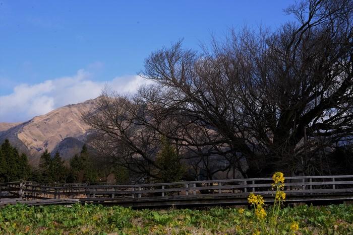 """南外輪山に囲まれた場所にある""""南阿蘇村""""は、火山によって作られたカルデラ(大きな凹地)の村。山から流れる水源がとても豊富なことでも有名。四季折々の自然の美しさを感じられるスポットが南阿蘇村にはたくさんあります。"""