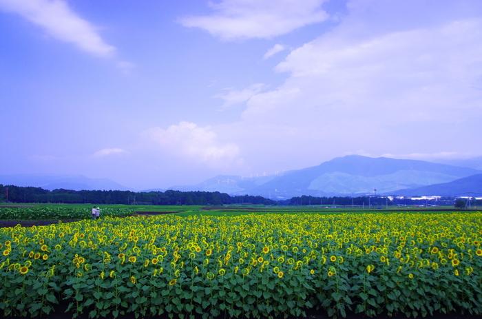 雄大な自然に囲まれた熊本県の「西原村」「南阿蘇村」の魅力をご紹介しましたが、いかがでしたか?今回ご紹介した以外にも、素晴らしい場所はまだまだたくさんあります。ぜひ実際に訪れてみて、大自然を存分に体感してみませんか?