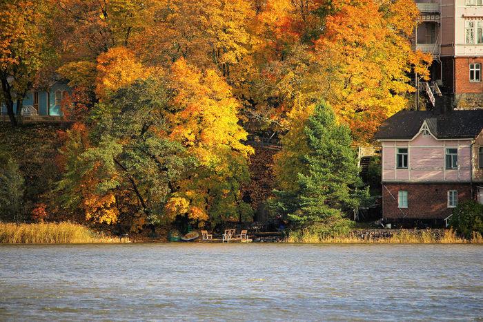 9~10月には秋を向かえ、あたり一面は別の世界のように。もちろん、北欧でも秋は紅葉の季節。フィンランド語でルスカ(ruska)と呼ばれ、赤・黄色・オレンジと美しい世界が広がります。