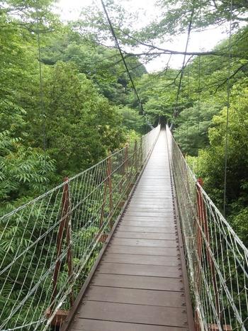 「駿河平自然公園」内で、おそらく誰もが心ときめくのが、こちらの「吊り橋」。長さは130mありますよ。