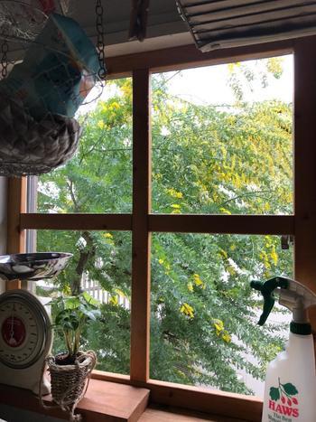 キッチンやリビングなど、家の中でもっとも長く過ごすスペースからよく見える場所に植えるという方も多くいらっしゃいます。家事の合間やちょっとした休憩時間にふと目に入る風景は、青葉や花の季節には特に嬉しいですよね。