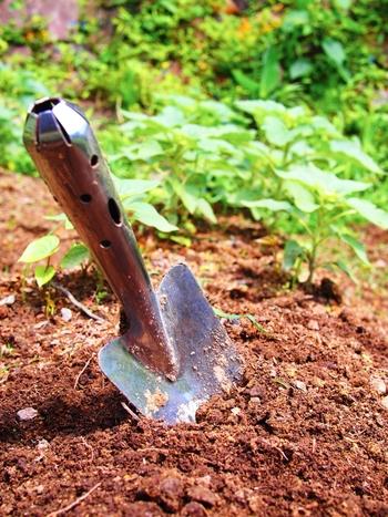 腐葉土や完熟堆肥などを混ぜて、土の水はけをよくしておきましょう。追肥の必要はありませんが、生育が悪い場合は12月から3月に緩効性化成肥料や固形の油かすを与えます。