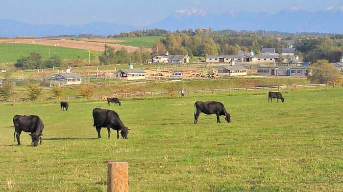 「ファームレストラン」という名の通り、周囲は牧場となっており、とってものどかな雰囲気が漂っています。
