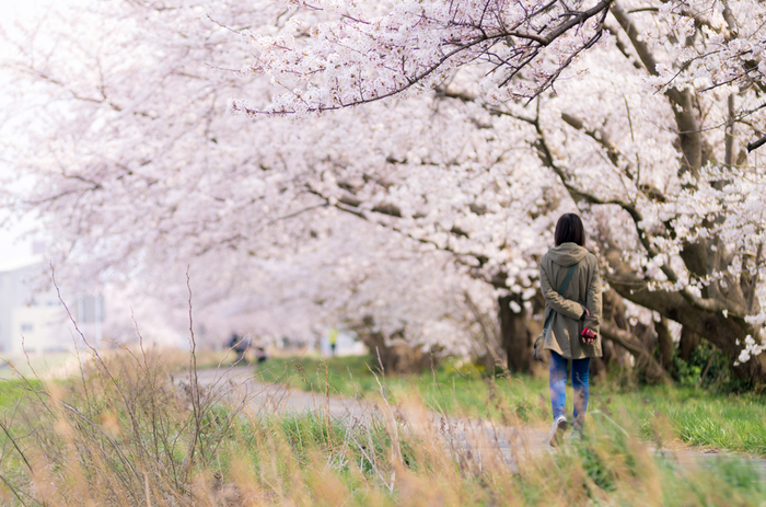 春にはお花見のスポットとしてもステキな場所。ぜひ四季の移ろいを感じながら歩いてみてくださいね。また、サイクリングロードもありますので、自転車をレンタルしてさわやかに走り抜けるのも良いでしょう♪