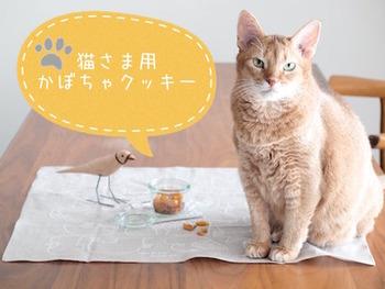 かぼちゃ、ヨーグルト、小麦粉だけで作るソフトクッキー。かぼちゃの甘みで人間が食べても美味しそうです。犬より口が小さく、アゴも弱めの猫ちゃんなので、小さくちぎってあげやすいものが良いですね。かぼちゃは栄養豊富で猫おやつにもおすすめの食材ですが、カロリーが高めなのであげすぎに注意しましょう。