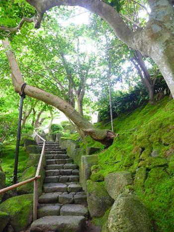 手入れの行き届いた報国寺は苔もとっても綺麗なんです。