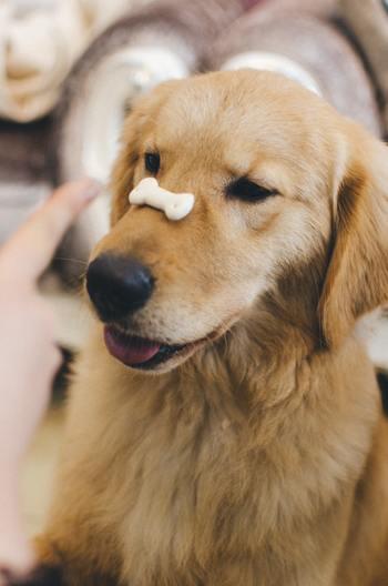 「美味しく食べて元気でいて欲しい」と願いながら心をこめて作る犬猫のおやつ。そんな飼主さんのキッチンで奮闘している姿や、出来上がったおやつを笑顔で持ってくる表情は、きっとわんこもにゃんこも見ています。たっぷりの愛情をこめて、大好きなあの子のためにぜひ作ってみてくださいね。