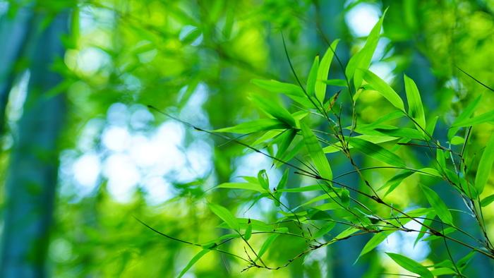 「竹の寺」でお馴染みの「報国寺」。見所満載の鎌倉では駆け足で色々まわってしまう方も多いと思いますが、今回は、鎌倉駅よりのんびりお散歩しながら「報国寺」を目指します。道中も楽しみながら訪れる報国寺へのふらり旅をご紹介したいと思います。