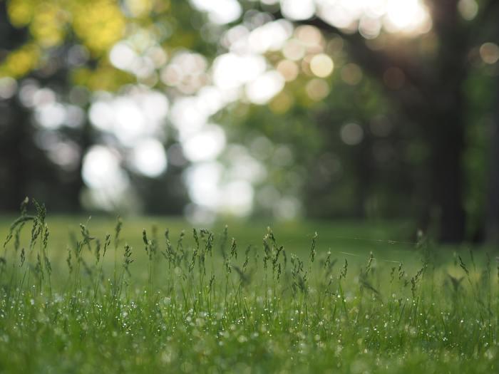 たくさんの雨を浴びて、太陽の光を浴びて。植物がグングン元気に育つ季節です。私たちも活動的に外にお出かけしたくなりますね。