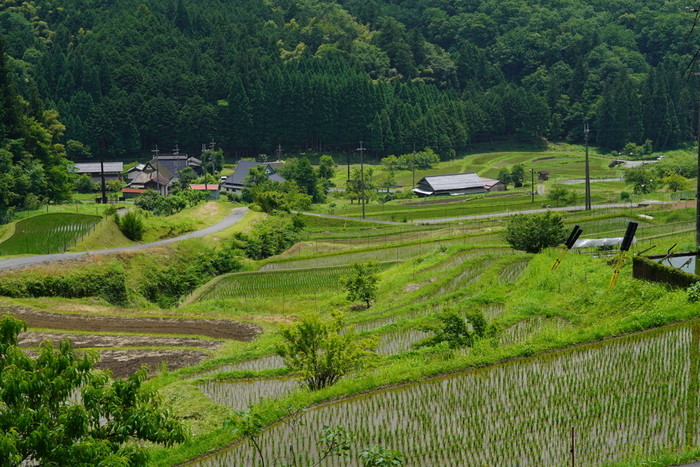 毛原の棚田は、「酒呑童子」の鬼伝説で有名な大江山麓に佇む棚田です。毛原の棚田では、美しい棚田風景を眺めるだけでなく、この地で開催されている農業体験ツアーに参加することもできます。
