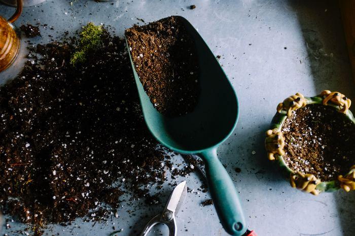 土なんて重くて運べない、園芸店で種を見てもどれがいいのかわからない・・・という方には、インターネット販売で手に入れるのがおすすめです。種類も豊富に用意されていますので、自分が欲しいものを見つけやすいメリットもあります◎