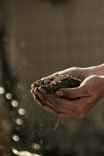 ベランダ菜園をする際におすすめなのが畑懐(はふう)の土。育てる培養土として販売されていて、交換する必要がない環境に優しい土なんです。