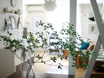 庭木で葉の付き方が涼し気な物をさらっと飾るのもおすすめです。枝ものは、切り込みを入れるなど水揚げにコツが必要ですがその分長持ちします。