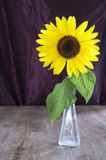毎日水換えするのはもちろん、花瓶から抜いて茎も流水で洗ってぬめりをとってあげましょう。また、水の中で茎を切る「水切り」をこまめにして、切り口を新鮮に保つことがポイントです。