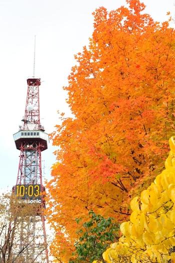 は約4700本の公園内の木々が美しく紅葉。さっぽろテレビ塔との美しい共演をカメラにおさめるには、まさに絶好の季節です。