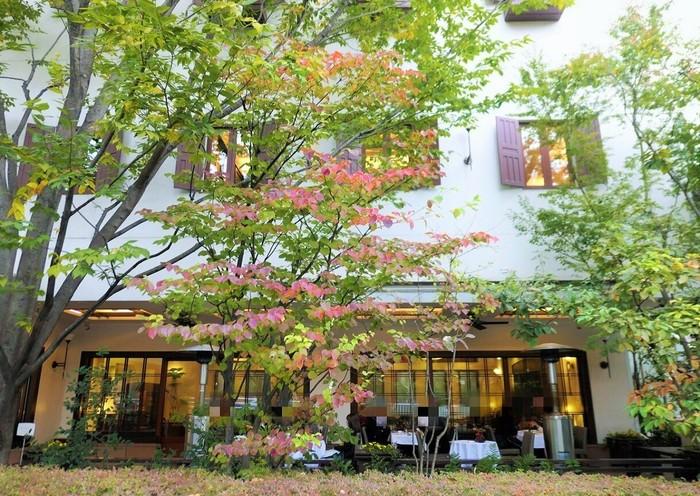 外苑東通りを隔てて広大な青山墓地の緑を望みます。春の新緑も秋の紅葉も美しい♪