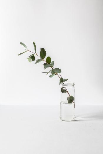 小さいビンに、葉を一本。本当にシンプルで、スペースも最小限でOKの飾り方。でも、空間にあるのとないのとでは印象は全く異なります。