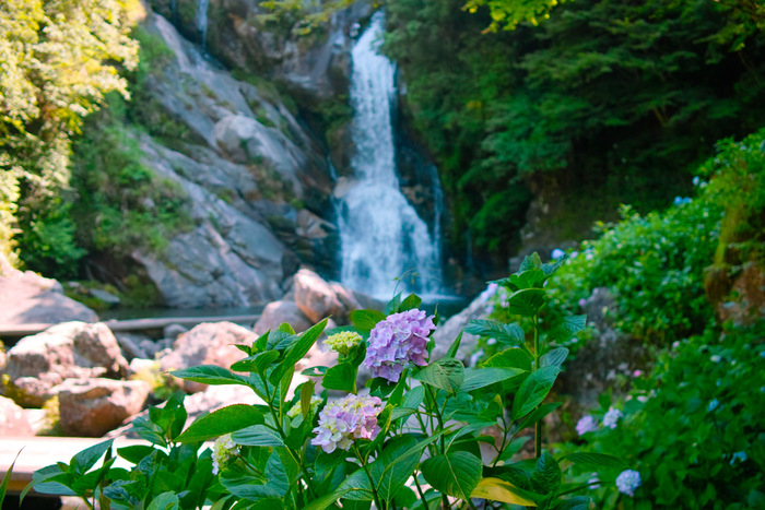 いかがでしたか?滝は涼を感じられるのはもちろん、自然の美しさに心も洗われますね。今年の夏は、九州の滝に出かけて疲れを癒しましょう!