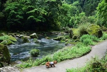 駐車場から滝壺までは約1200mで勾配がありますが、ちょっとした山登り気分で自然を感じながら散策を楽しんでみてください♪