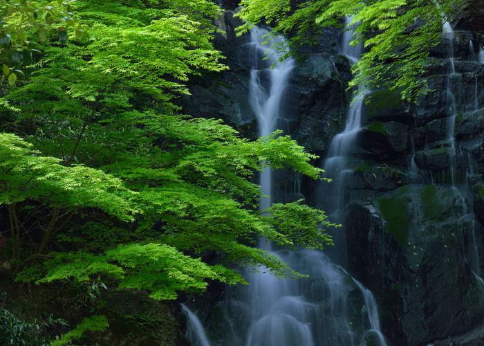 もちろん迫力もありますが、水の音を聞きながらゆっくりと眺めていたくなるような滝です。滝の側に自生する県指定天然記念物、樹齢約300年以上の萬龍楓も滝をより美しく見せています。