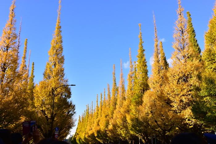 木立の完璧な美しさで知られる神宮銀杏並木は目と鼻の先♪黄葉は、11月中旬から見ごろを迎えます。