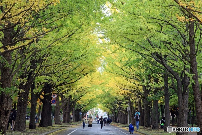 プラ並木と農場の組み合わせは、北海道らしい風景の一ページ。 広大な敷地を誇る「北海道大学」まずは正門を入ってすぐ左手にあるインフォメーションセンター「エルムの森」でキャンパスマップを入手し、キャンパス巡りに出発しましょう!